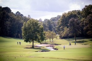 wide view of the greens